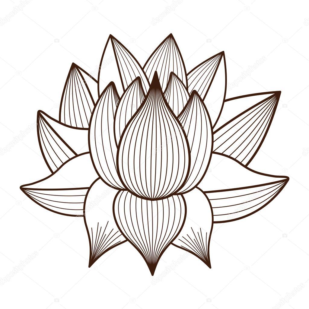 1024x1024 Lotus Flower Drawing Jpg Image Lotus Flower Pencil Drawing Flower