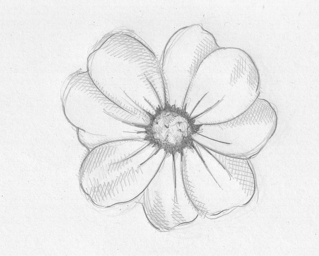 1064x855 Pencil Drawing Flowers Easy