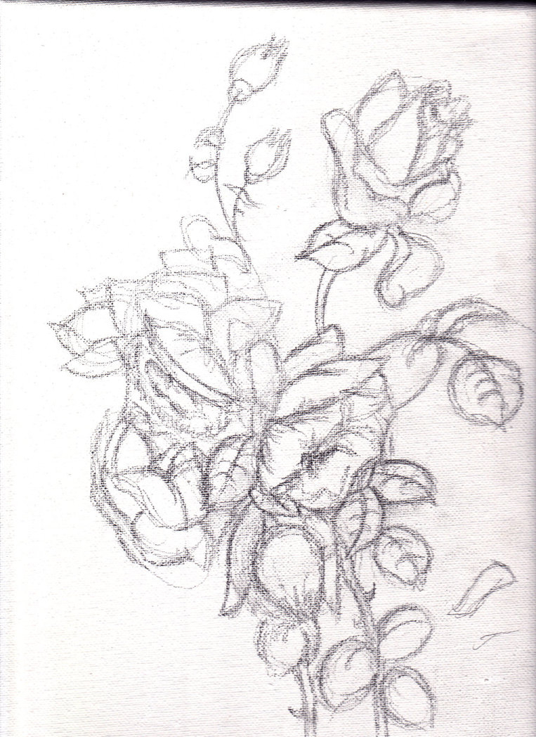 763x1048 Pencil Drawing Sketches Of Flowers