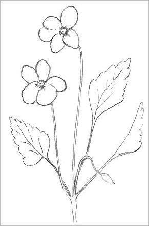 291x440 Photos Flower Pencil Drawings Printable,