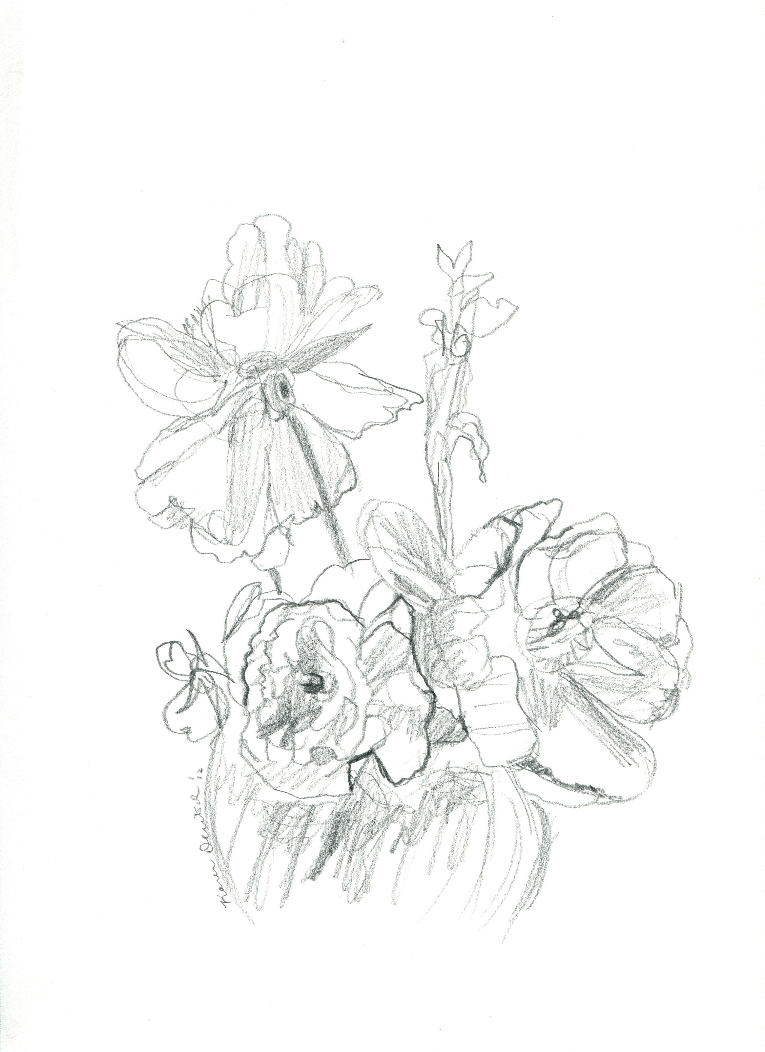 2550x3509 Pencil Drawing Flowers Photos Archives