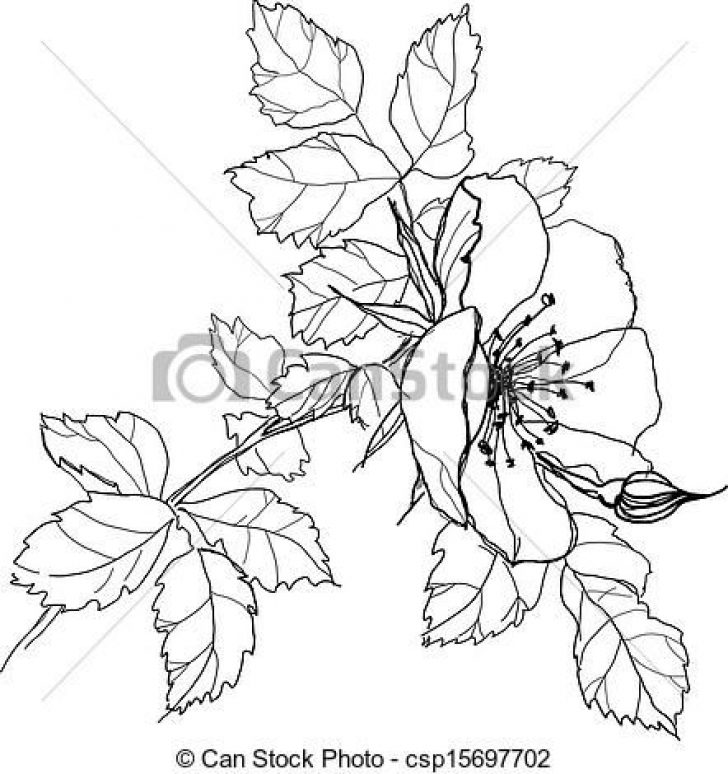 728x774 Pictures Of Pencil Drawings Of Flowers Archives