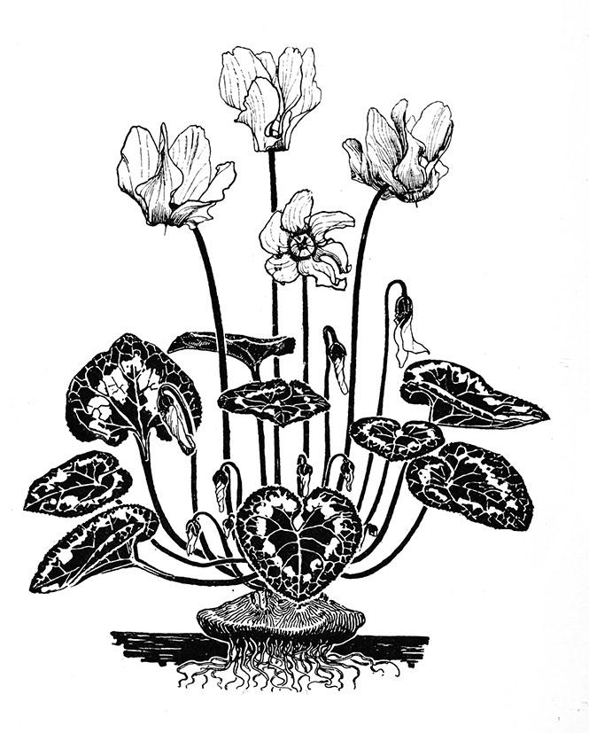 665x827 Flower Sketches