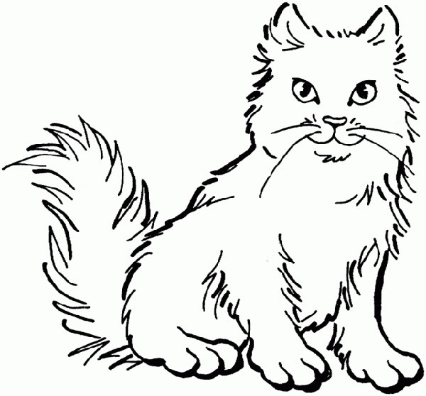 600x558 Animal Coloring Pages For Kids Fluffy Cat Fluffy Cat