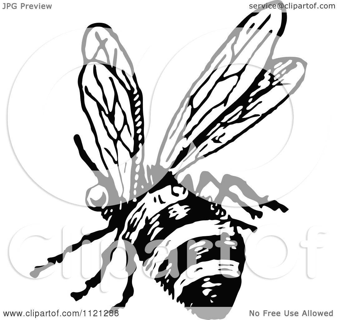 1080x1024 Clipart Of A Retro Vintage Black And White Flying Bee 2