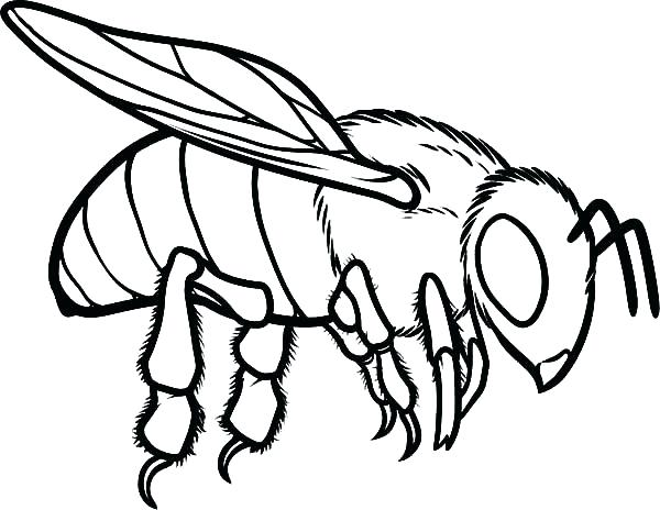 600x464 Coloring Page Bee Cartoon Bee Flower A Page To Print Out