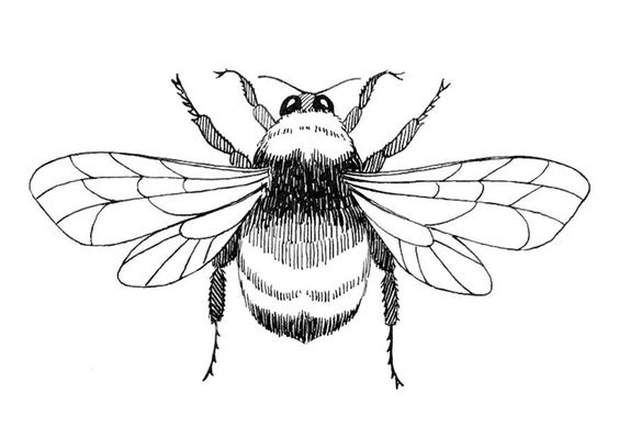 564x399 17 Bumble Bee Coloring Pages Bumble Bee Coloring Pictures 1