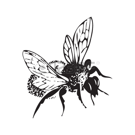 450x450 Vector Engraving Antique Illustration Of Honey Flying Bee