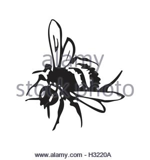 300x320 Vector Engraving Antique Illustration Of Honey Flying Bees