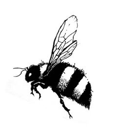 236x262 What Does A Bee Look Like When It's Magnified 3000 Times Bees