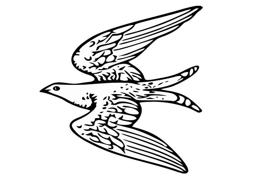 875x620 Coloring Page Flying Bird