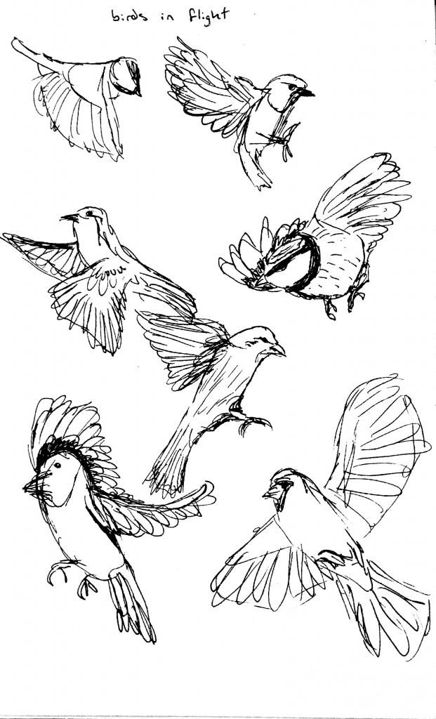 621x1024 Drawing Of Birds Flying How To Draw Flying Bird How To Draw