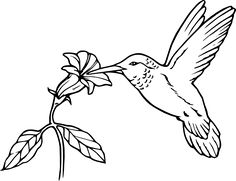 236x181 BIRD Coloring Pages 81 Free Birds Amp