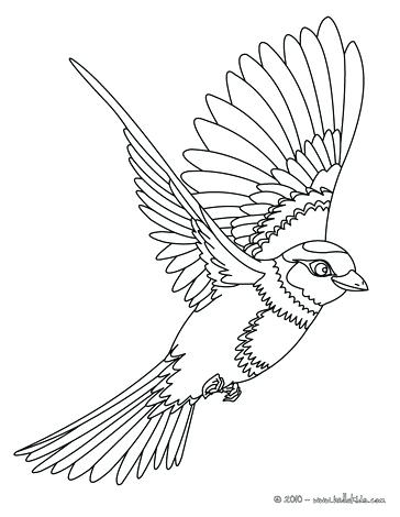 364x470 Coloring Pages Of Birds Bird Sitting On A Branch Flying Bird