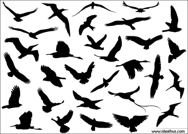 600x429 30 Different Flying Birds Free Vector In Adobe Illustrator Ai