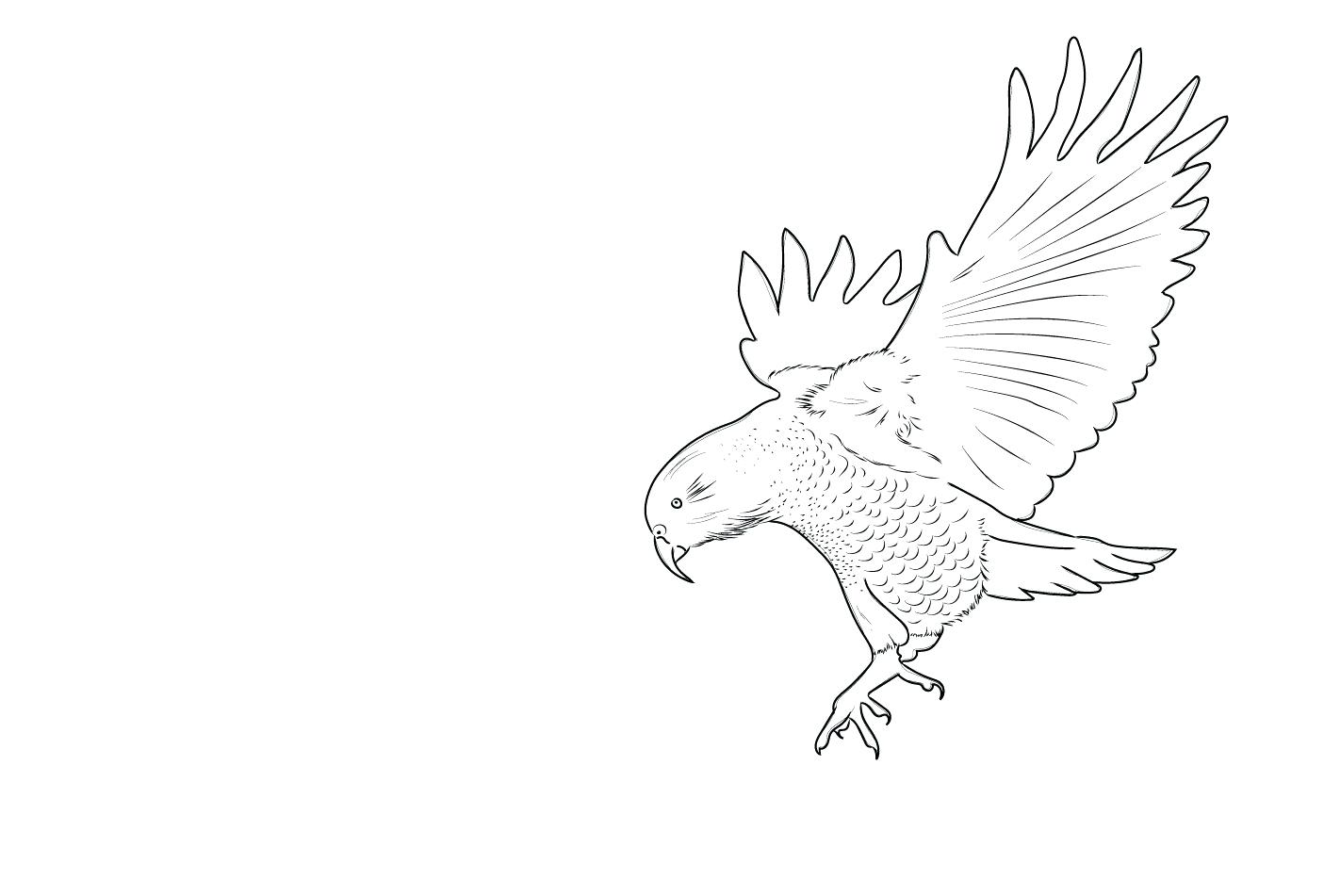 1405x951 Hedgehog Outline Birds Of Prey Bird Tattoo Tumblr Birdcage Clipart