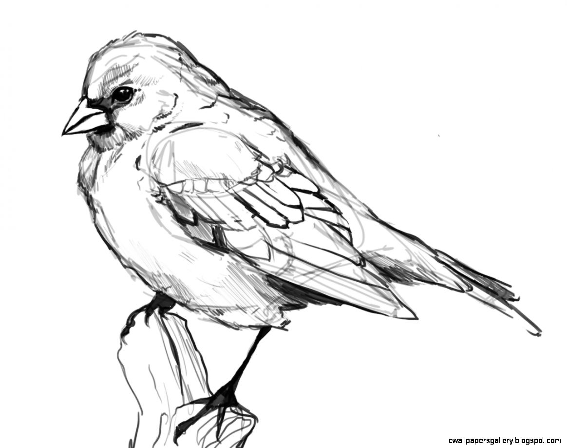 1164x919 Bird Drawings Crafthubs