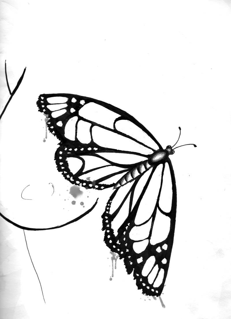 Flying Butterfly Drawing