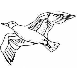 Flying Crow Drawing At GetDrawingscom Free For Personal Use