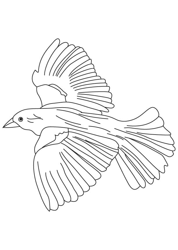 Flying crow drawing at free for personal for Flying crow coloring page
