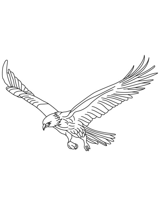 630x810 Broad Wings Bird In Flight Coloring Page Download Free