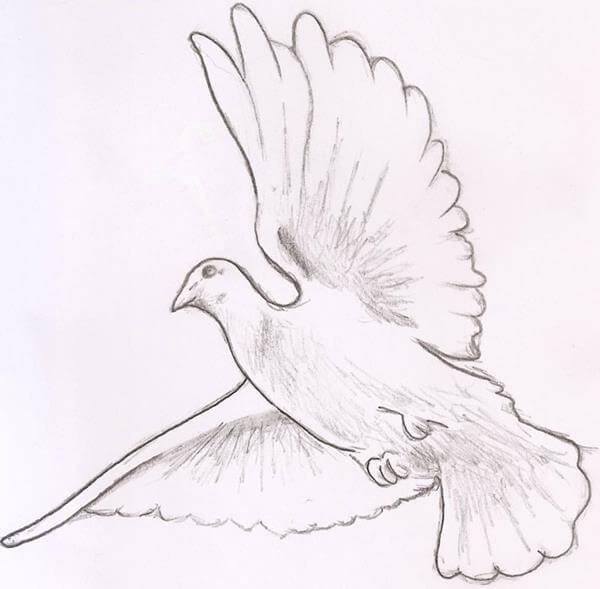 Flying Doves Drawing