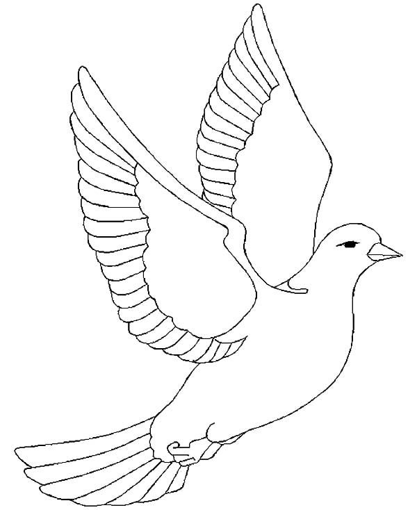 600x734 Pictures Of A Dove Flying To Color Doves In The Sky
