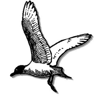 310x315 Flying Duck Clipart Clipart Panda