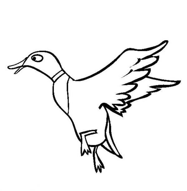 600x614 Flying Duck Coloring Page