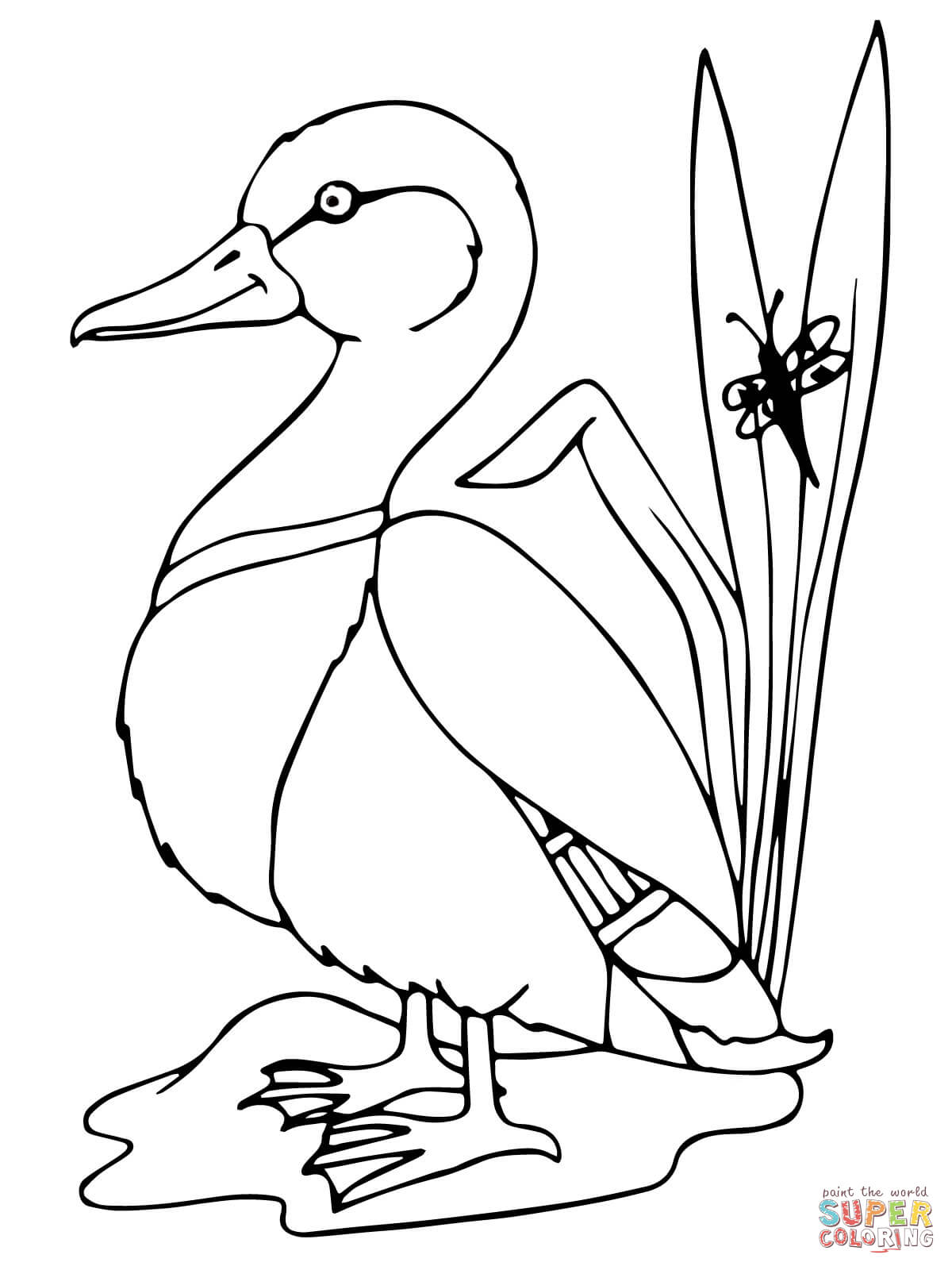 1200x1600 Mallard Duck Coloring Page Free Printable Coloring Pages