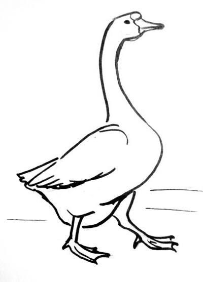 400x557 The Best Goose Drawing Ideas On Doodle Ideas