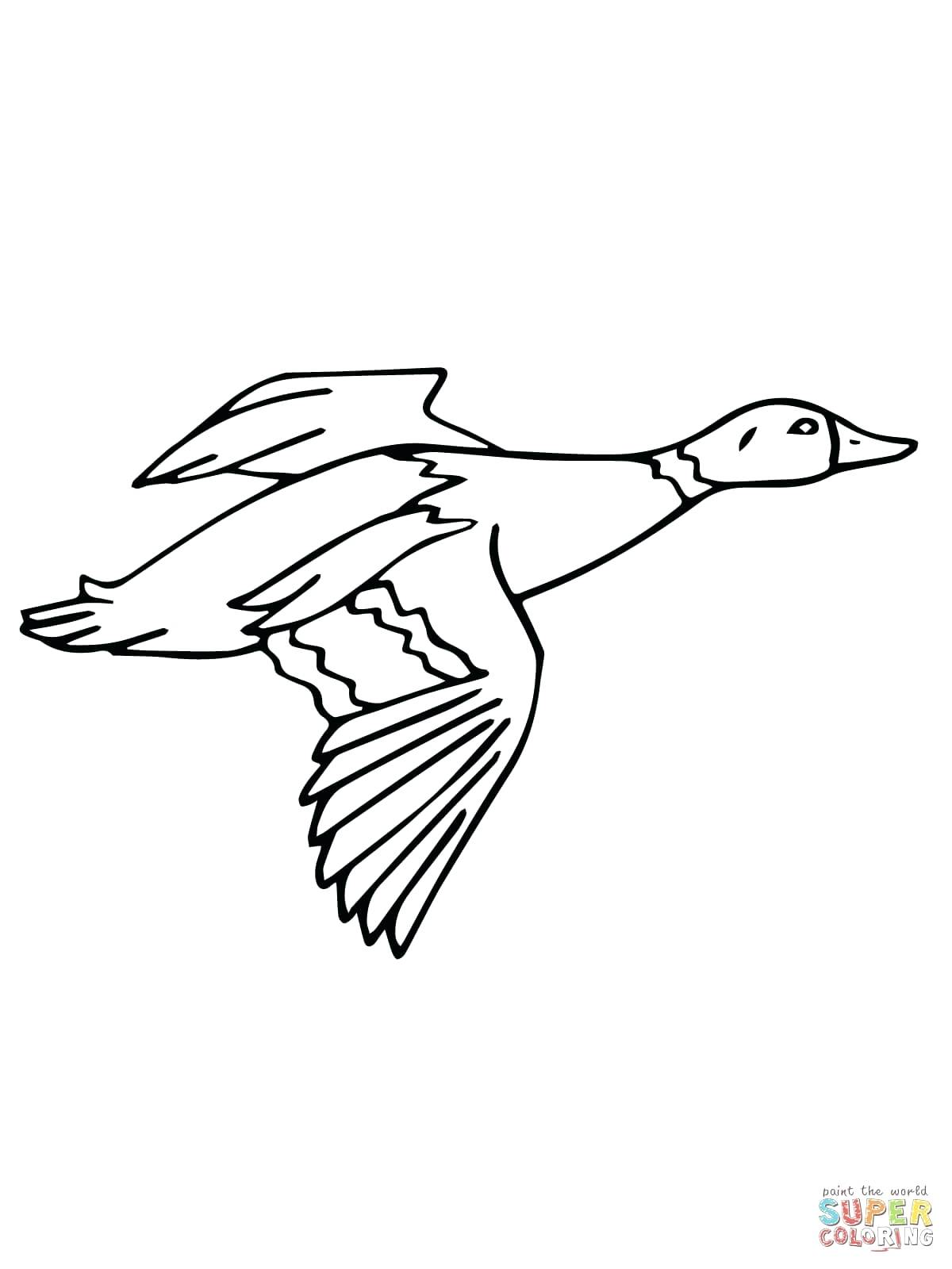 1200x1600 Coloring Duck Coloring Sheets Flying Mallard Drake Donald Pages