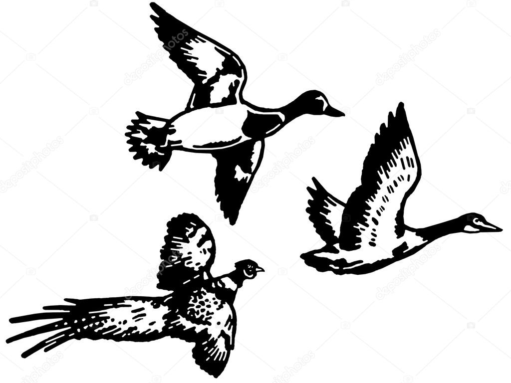 1024x768 A Black And White Version Of Three Different Breeds Of Duck Flying