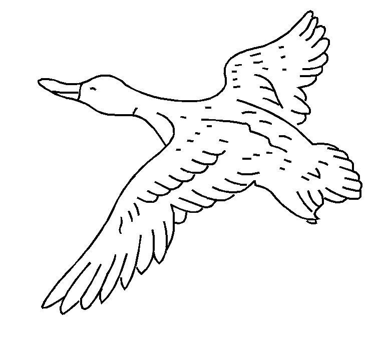 753x685 Bird
