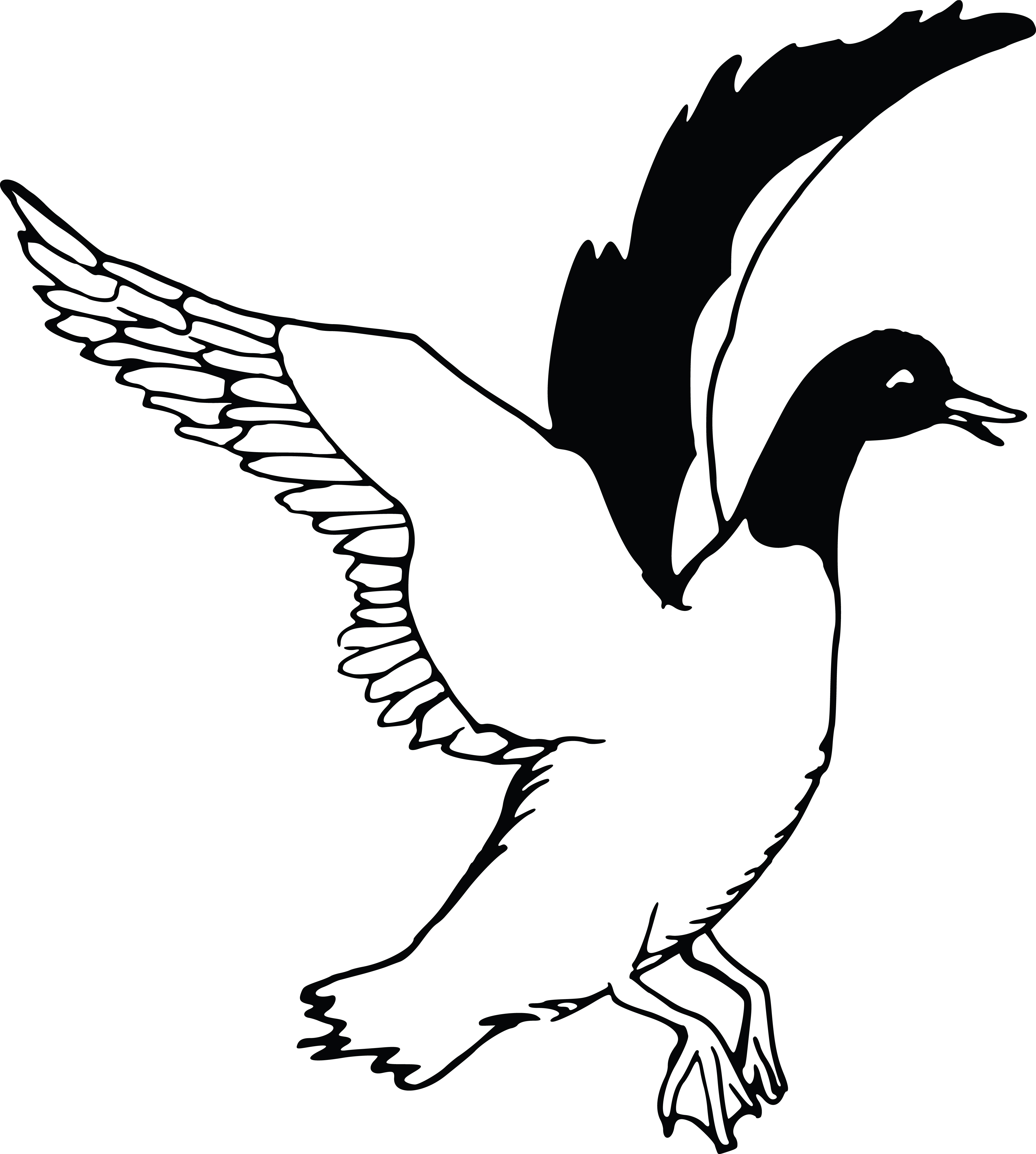 4000x4454 Clipart Of A Flying Duck