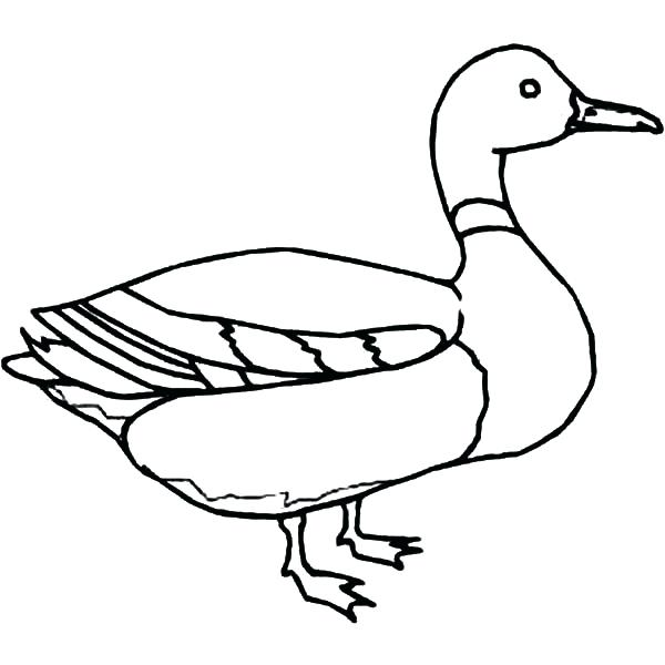 600x600 Coloring Page Of A Duck Flying Duck Coloring Pages Free Coloring