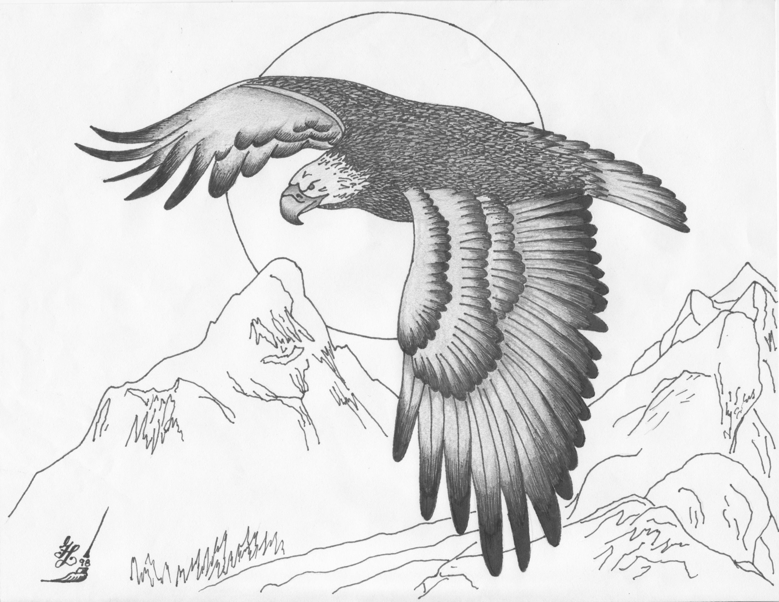 simple flying eagle drawing 36131 loadtve