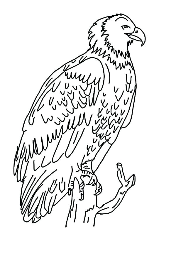 600x896 Harpy Eagle Coloring Page Eagle Color Page Drawing Flying Eagle