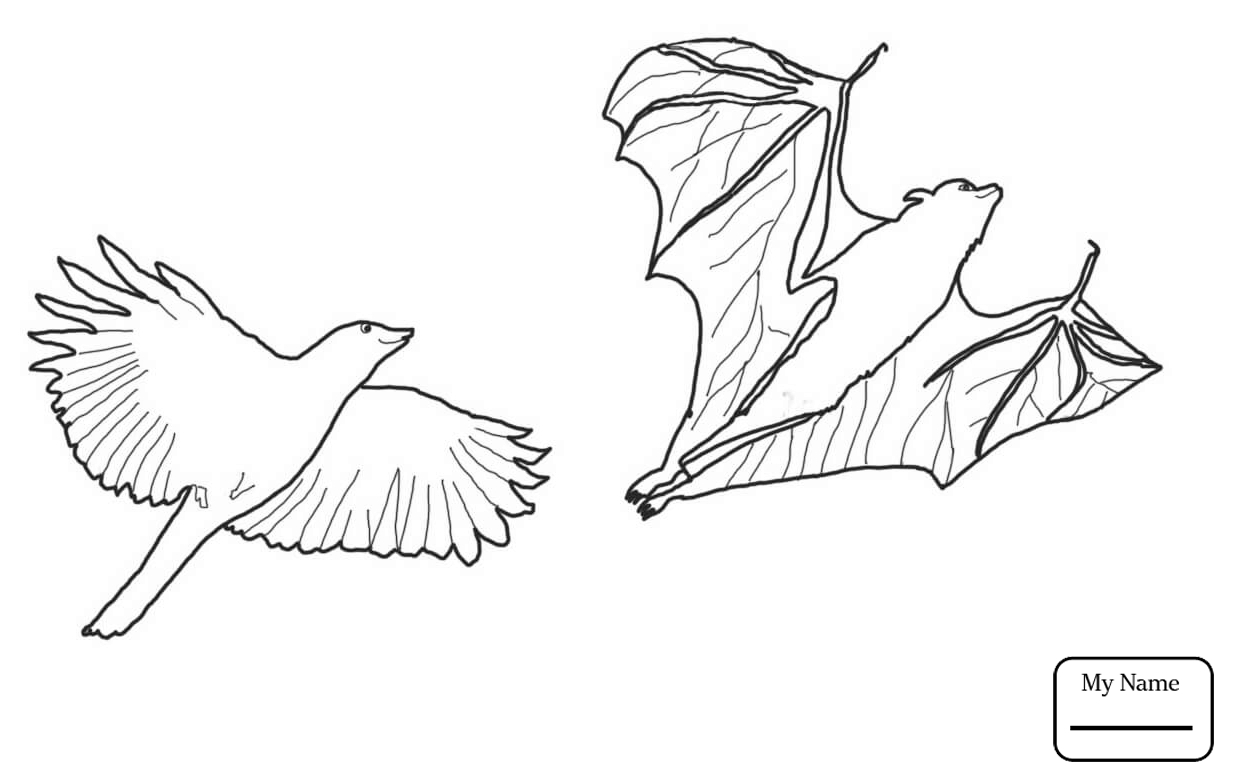 1234x777 Coloring Pages Crow Chasing Flying Fox Flying Fox Mammals