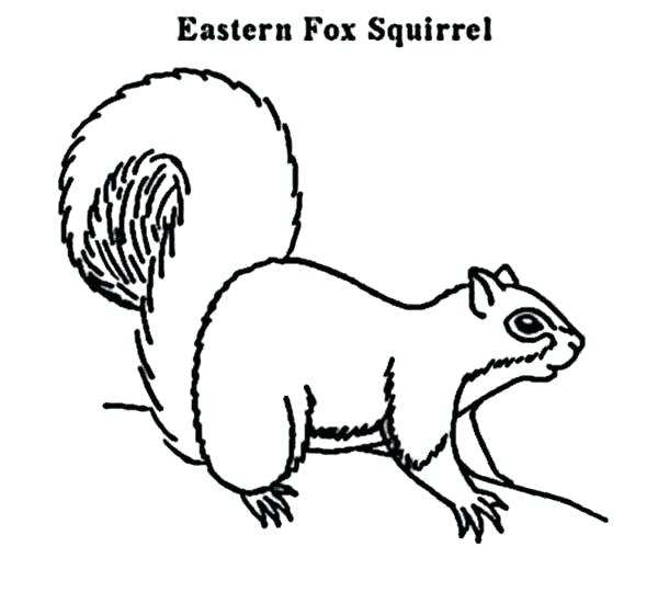 600x540 Picture Of A Squirrel To Color