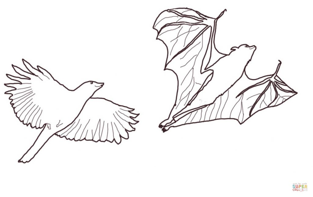 1024x645 Crow Chasing Flying Fox Coloring Page Print Download
