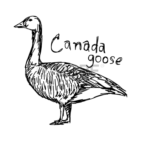 450x450 146 Canada Goose Stock Vector Illustration And Royalty Free Canada