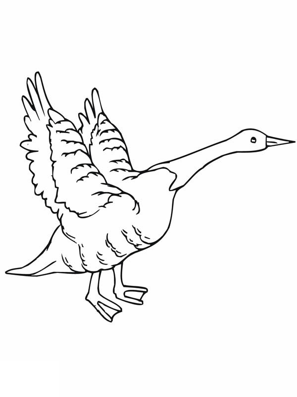 600x800 Goose Flying Coloring Page