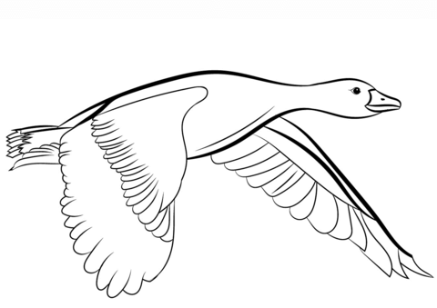 480x339 Goose Flying Coloring Page Free Printable Coloring Pages