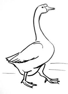 236x328 Learn How To Draw A Canada Goose (Birds) Step By Step Drawing