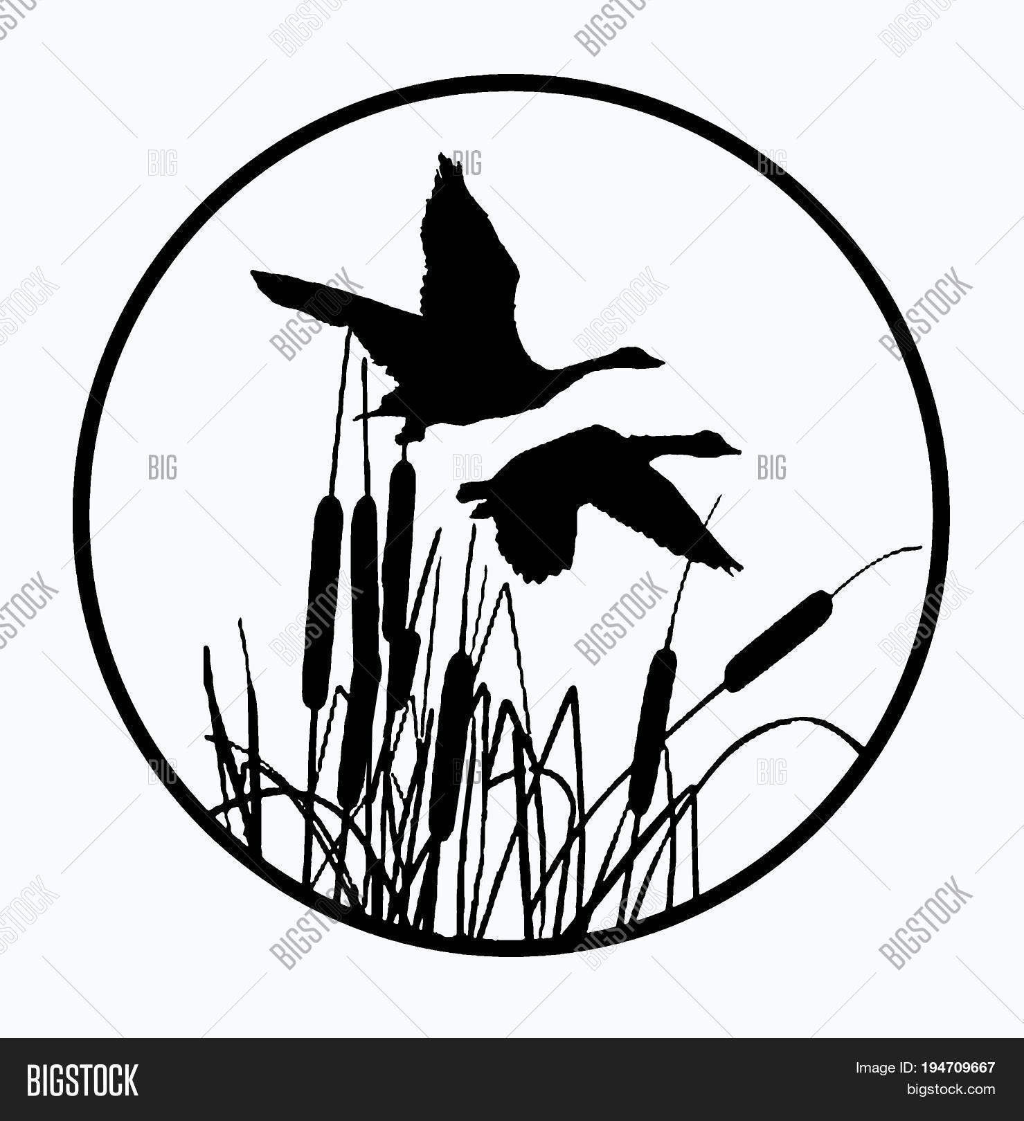 1479x1620 Two Geese Flying Over Cattails Image Amp Photo Bigstock