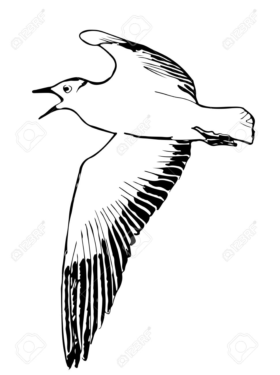 972x1300 A Hand Drawn Vector Illustration Sketch Of A Seagull Flying