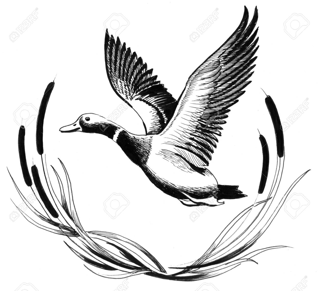 1300x1189 Flying Goose Stock Photo, Picture And Royalty Free Image. Image