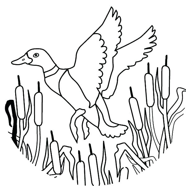 600x600 Duck Color Page How To Draw Flying Mallard Duck Coloring Pages