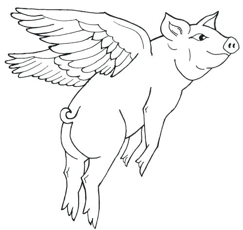 500x473 Best Of Pig Coloring Page Images Flying Pig Coloring Pages Pig